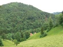 Bruederwald